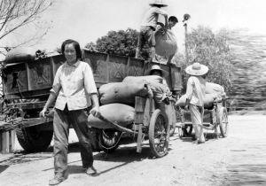 华西村历史上的集体劳动