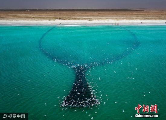 美研究称气候暖化影响海洋生物 渔产减少威胁粮食