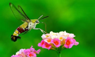 Insects fly among flowers in southeast China's Fujian