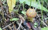 今年近8000人误食毒蘑菇引起中毒!这些食物也要注意→