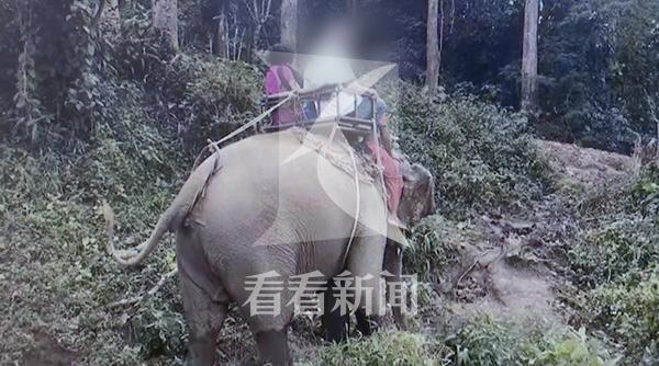 泰国惊魂!大象载中国游客狂奔 全家老小6人受伤