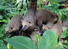 迪居甲国家公园动物