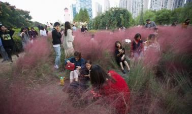 Grass removed after trampling by tourists
