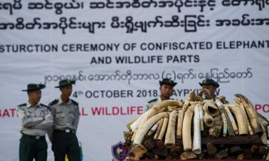 UK forms task force to crack down on illegal wildlife trade