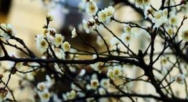 十日谈 | 一窗浮梦到梅花