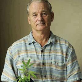 比尔·默瑞