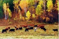 畜牧业资源
