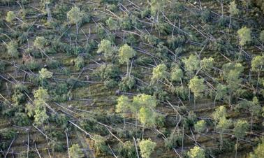 EU forests can't help climate fight: study