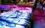 新鲜春鲅鱼大量上市 青岛本地鲅鱼还得再等等