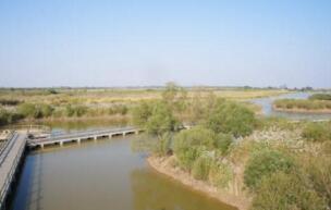 萧县黄河故道湿地省级自然保护区